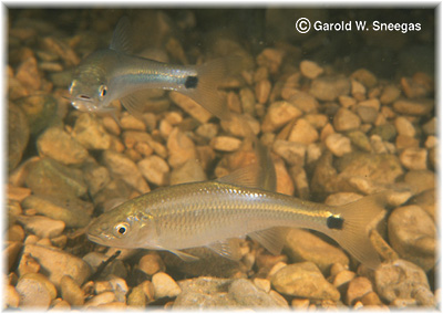 Freshwater North American Fishes